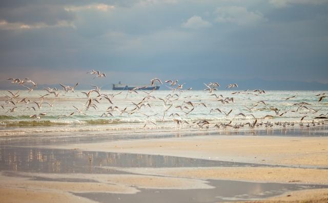 波動コミュニケーション 鳥の群れ