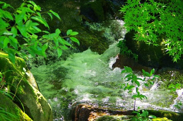 お水を守る活動①またやってしまいます…