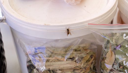サハリンの市場にハチ