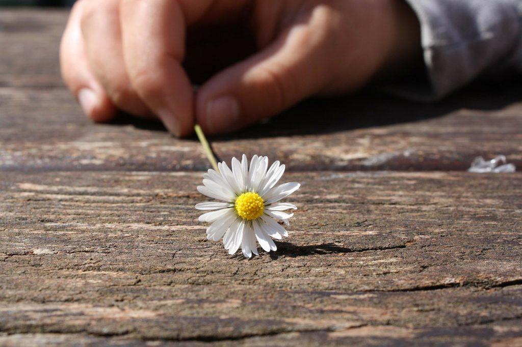 たんぽぽの花を持っている