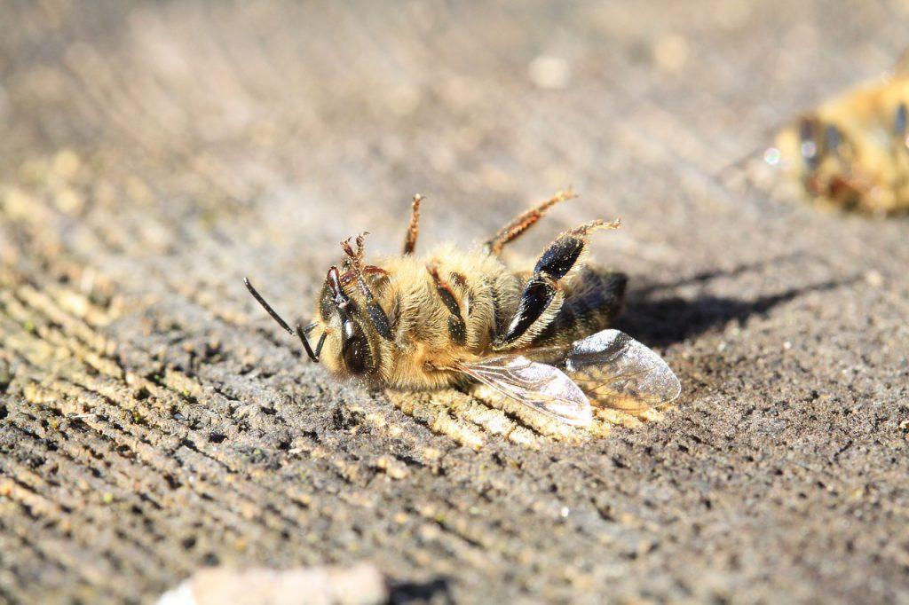 死んでいる蜂